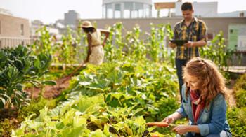Urban regeneration, garden, roof, urban gardening, urban farming