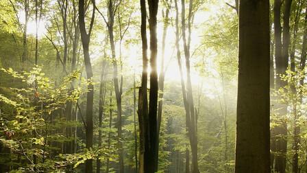 duurzaamheid, bomen, durability, trees, forest