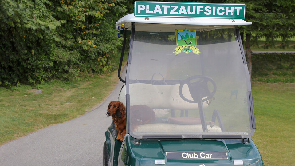 press, golf tournament 2018, golf cart, dog, adamstal, presse, austria
