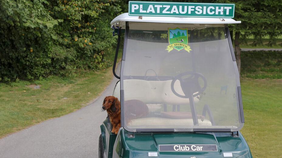 press, golf tournament 2018, golf cart, dog, adamstal, presse, austria