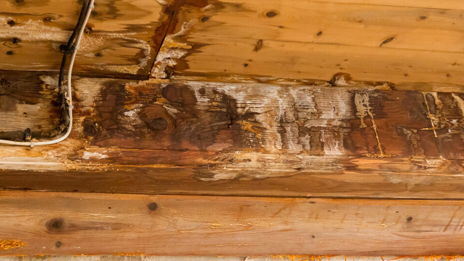 water damaged ceiling and wall, leakage in an old building, mould, humidity, moisture, construction damage, austria