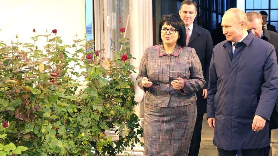 Grodan, stone wool, Putin, greenhouse