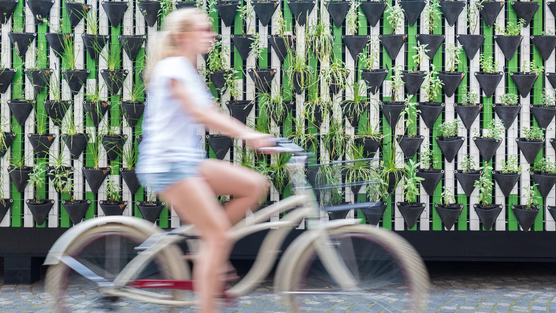 Plants, Bicycle, Woman,