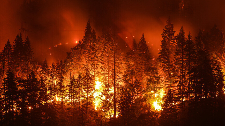 Forrest, Fire, Trees, Burnt